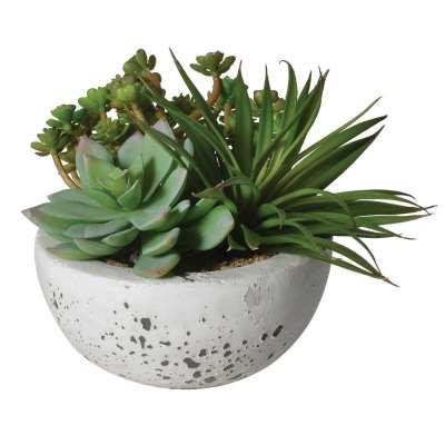 Large Succulent Bowl