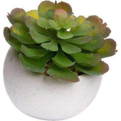 Miniature Lola Succulent In Cement Pot