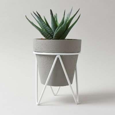 Aloe Vera Succulent in Grey Tripod Pot Green