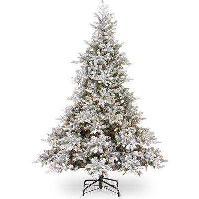 6ft Pre-Lit Frosted Andorra Fir Christmas Tree NA