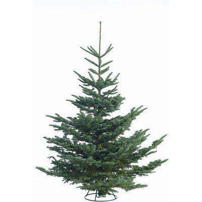 5-6ft Noble Fir Real Cut Christmas Tree