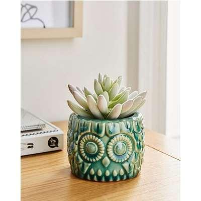Fiori Blue Small Owl Pot With Succulent