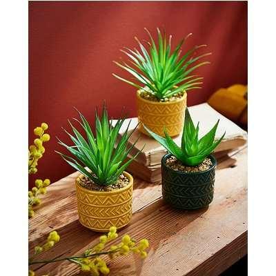 Set of 3 Vibrant Succulents