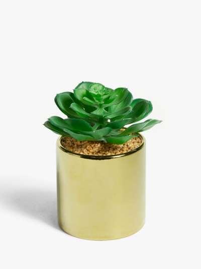 John Lewis & Partners Artificial Low Leaved Succulent