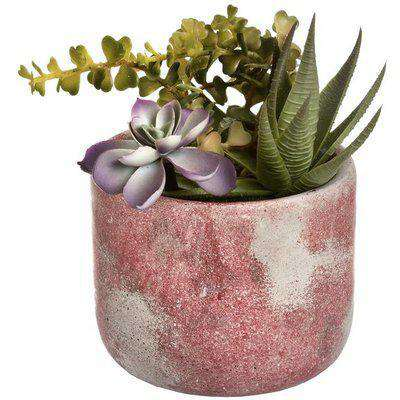 Hill Potted Succulent